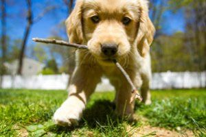 #animals #puppies #dogs #wallpapers #freewallpapers #freebies