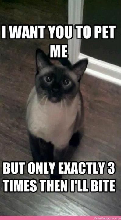 Pin By Sandi Steinberg On Cutie Kitties Funny Cats Funny Animal Memes Cute Funny Animals