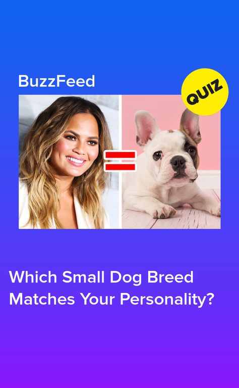 Which Small Dog Breed Matches Your Personality Dog Breeds Small Dog Breeds Dogs
