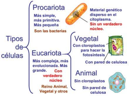 Clasificación De Las Células Tipos De Células Procariota Y Eucariota Clasificacion De Las Celulas Celula Procariota Y Eucariota