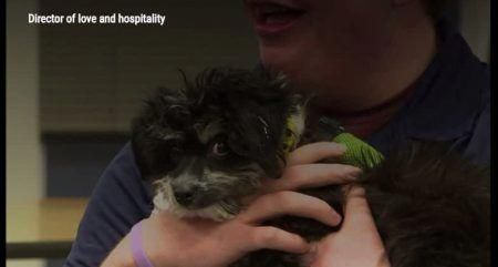 Mike The Puppy Is Director Of Love And Hospitality At This High School Puppy Training School