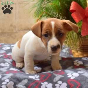 Puppies For Sale Under 500 Price Under 500 Greenfield Puppies In 2020 Golden Retriever Mix Puppies Greenfield Puppies Shepherd Mix Puppies