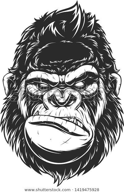 Encontre Imagens Stock De Vector Illustration Ferocious Gorilla Head On Em Hd E Milhoes De Outras Fotos Ilustracoes E I Gorilla Tattoo Gorillas Art Monkey Art