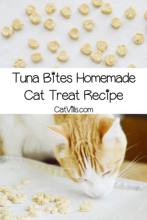 Tuna Bites Homemade Cat Treat Recipe for Sensitive Stomach – CatVills – Cat Supplies Dog Treat Recipes, Cat Recipes, Dog Food Recipes, Tuna Cat Treat Recipe, Snack Recipes, Kitten Treats, Pet Treats, Homemade Cat Food, Homemade Recipe