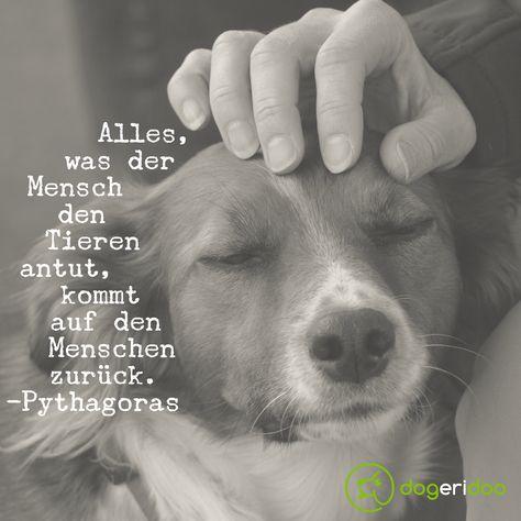 Unsere Hunde zeigen uns jeden Tag wie sie die Liebe zurück geben. Und etwas anderes als Liebe hat eh kein Tier verdient