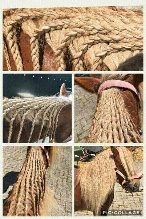 Pin Von Sarlota Mamulova Auf Penteados Em Cavalos In 2020 Pferde Frisuren Pferdefrisuren Pferdemahne