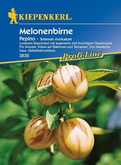 Melonenbirne Pepino Melonenbirnesamen Von Kiepenkerl In 2020 Melonenbirne Obst Melone