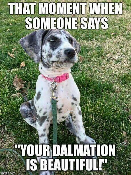 Isley Doesn T Look Anything Like A Dalmatian And I Still Get This