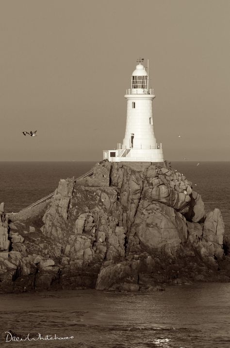 Gulls at the lighthouse by Drew Whitehouse