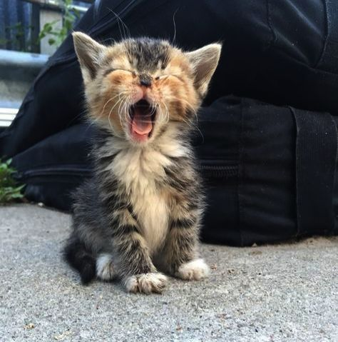 Excellent Kittens Meowing Sound Collect Kittens Cutest Cute Animals Cute Baby Animals
