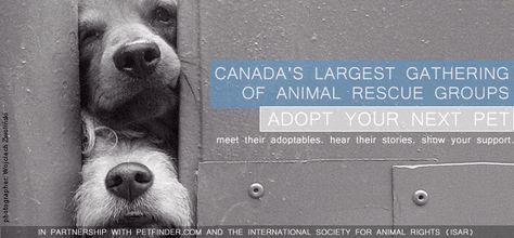 Pawlooza Dogs Dog Friends Animal Rescue