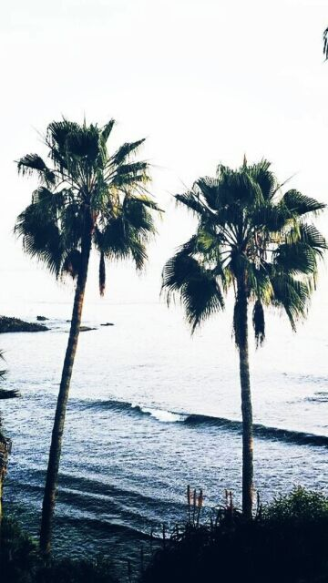 Palm Trees IPhone Wallpaper IPod HD Free Download