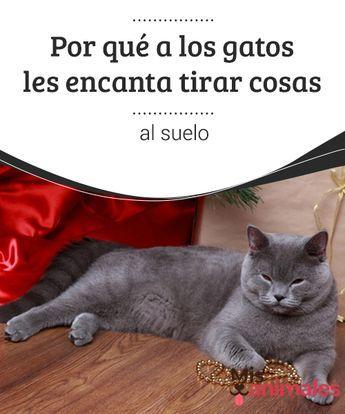 Por Que A Los Gatos Les Encanta Tirar Cosas Al Suelo Si Convives