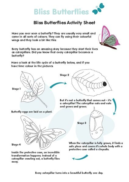 31+ Butterfly cycle worksheet Online
