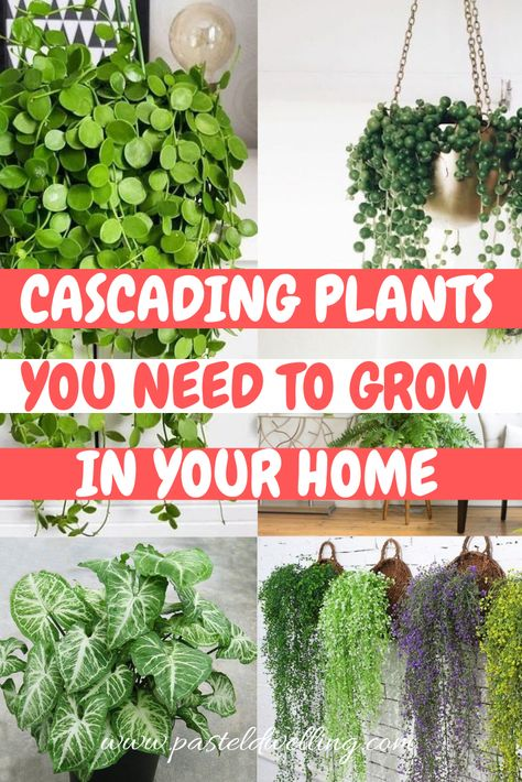10 Cascading Plants You Can Grow Indoors for Home Decoration is part of Hanging plants indoor - 10 Cascading Plants You Can Grow Indoors for Home Decoration Pastel Dwelling Discover our best practices for gardening and inhome diy!