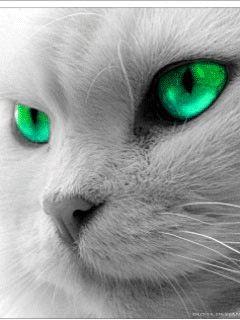 Скринсейвер на котором кот
