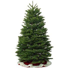 10 11 Ft Noble Fir Real Christmas Tree Lowes Com Types Of Christmas Trees Noble Fir Christmas Tree Real Christmas Tree
