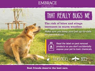 Embrace Pet Insurance Embrace Pet Insurance Pet Insurance Cost Pet Health Insurance