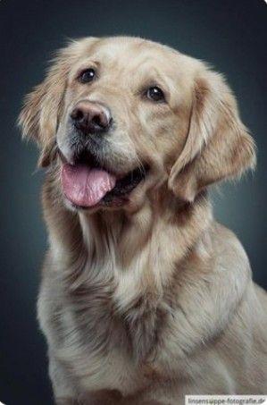 Pin Oleh Michel Eunice Nava Di Animali Anjing Hewan Gambar