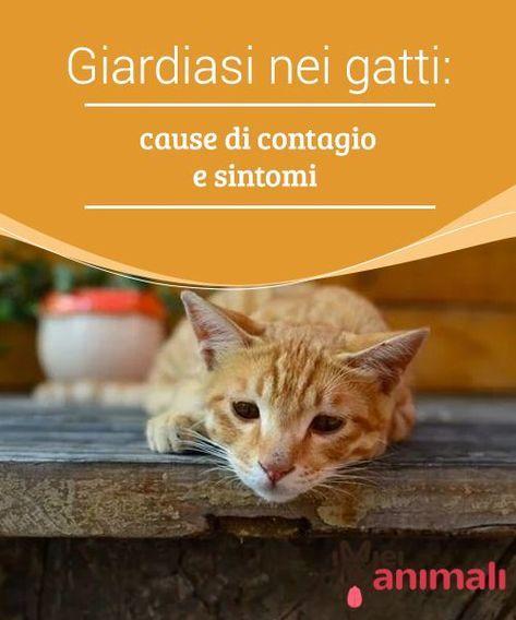 giardia contagio tra gatti