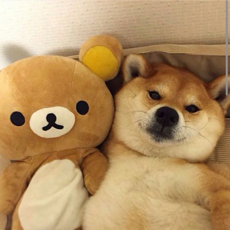 Top Rilakkuma Anime Adorable Dog - 56f4ea25775e36043a62713f60699d54--rilakkuma-bunny  2018_537884  .jpg
