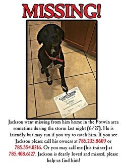 Lost Dog Poster  Lost Your Pet    Dog Poster And Dog