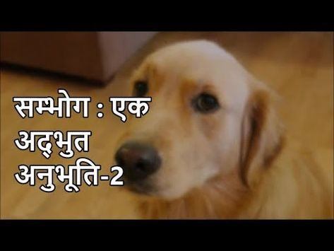 Home Youtube English Golden Retrievers Goldendoodle Dogs