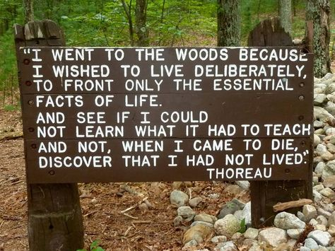 The sign in the woods of Massachusetts where Thoreau lived between 1945-47,with the quote of his book'Walden'