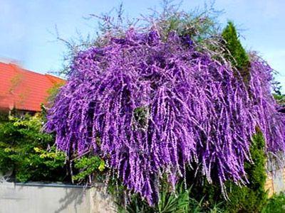 Przedmioty Uzytkownika Gladi20 Drzewa I Krzewy Lisciaste Allegro Pl Plants Flower Garden Garden
