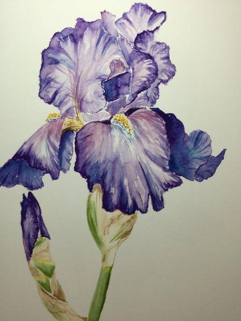 Iris Violet Aquarelle 2 Aquarelle Tatouage Iris Et Idees D
