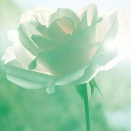 Flowers Aesthetic Pastel Green 20 Ideas Flowers Mint Green Images, Photos, Reviews