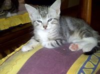 Gumtree Kittens Looking For Homes Free Pictures Of Cute
