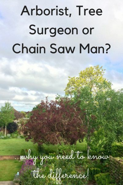 Tree Surgeon Arborist Or Chain Saw Man Why You Need To Know The Middle Sized Garden Tree Surgeons Arborist Tree Care