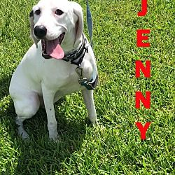 Orlando Florida Treeing Walker Coonhound Meet Jenny A For Adoption Https Www Adoptapet Com Pet 2731 Treeing Walker Coonhound Walker Coonhound Coonhound