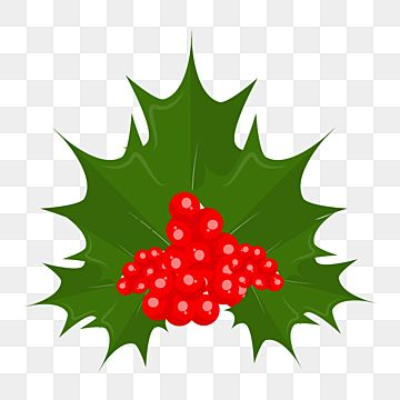 Holly Christmas Decorative Png Element Green Abstract Berry Red Red Berry Png And Vector With Transparent Background For Free Download Christmas Holly Frozen Cards Christmas Greeting Cards