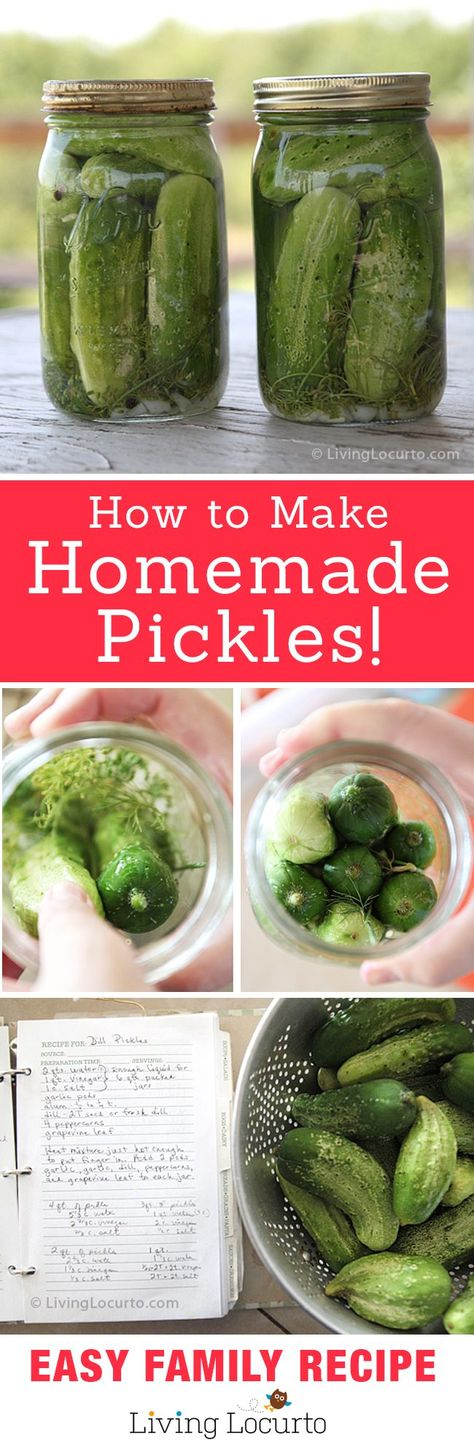 Homemade Refrigerator Pickles Recipe! Easy old fashion family recipe for a crunchy treat. Makes great gifts. LivingLocurto.com