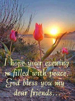 50 Lovely Good Evening Quotes and Wishes