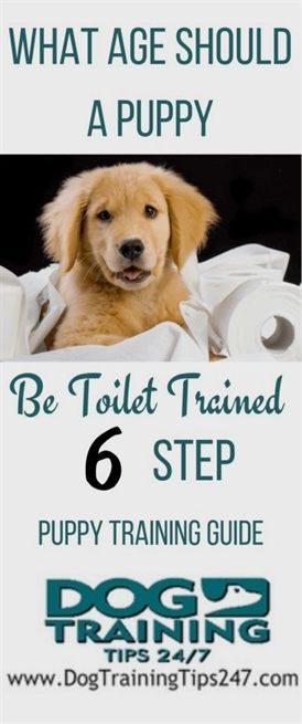 Every Dog Needs To Be Trained Properly Guide Dog Training Puppy