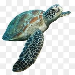 Free Download Sea Turtle Png Image Iccpic Iccpic Com Turtle Sea Turtle Sea