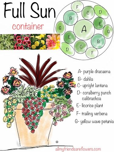 all my friends are flowers full sun container planting plan annuals Flowers Pinterest