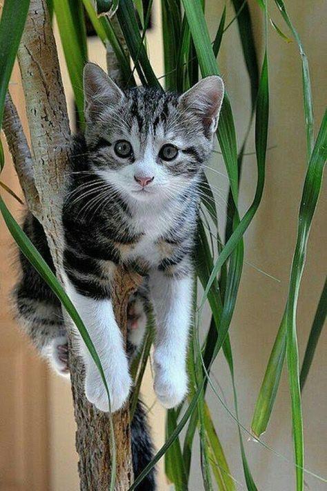 Idee Von Mon Magasin General Auf Animaux Katzen Tiere Lustige Katzen