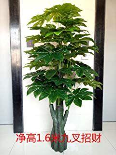 Sproud La Nueva Planta Falsa árbol Pachira Simulación