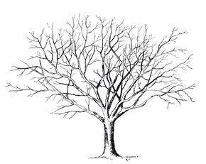 Malvorlage Baum Ohne Blätter Bäume Malen In 2019 Baum