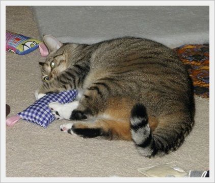 Sister Gracie Having Fun Bunny Kicking Our Silverine Pillow Http Www Nipandbones Com Silvervine Pillow For Cats Html Via Brian Cat Adoption Tabby Pet Owners