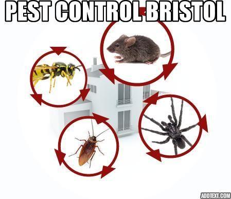 Pest Control Bristol Pest Control Termite Control Termite Pest Control