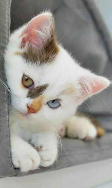 Pin By Dorn On Cats Baby Animals Kittens Cutest Cute Cats