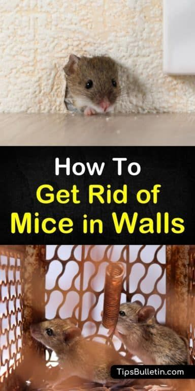 6 Clever Ways To Get Rid Of Mice In Walls In 2020 Getting Rid Of Mice Mice Repellent Getting Rid Of Rats