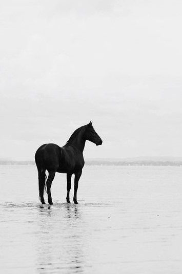 Black And White Horse Photography Australia