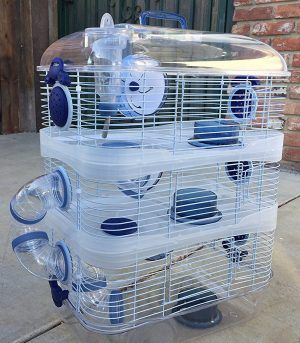 Top 10 Best Hamster Cages In 2020 Hamster Cages Cool Hamster