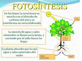 Thames Infantil Cartel De La Fotosintesis Como Ensenar A Leer La Fotosintesis Para Ninos Ciencia Natural